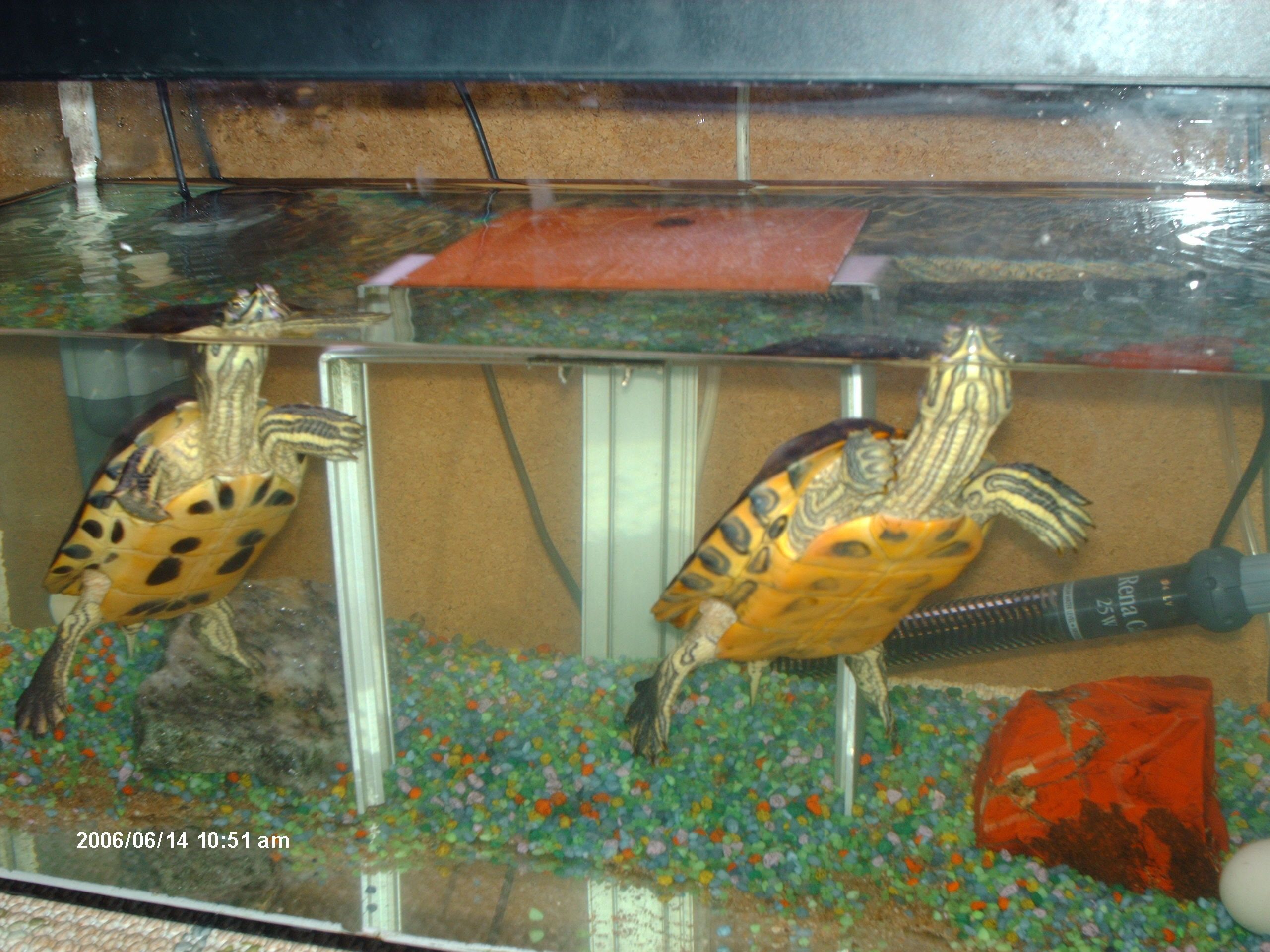 De belles photos de tortues for Aquarium tortue